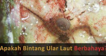 bintang ular laut berbahaya