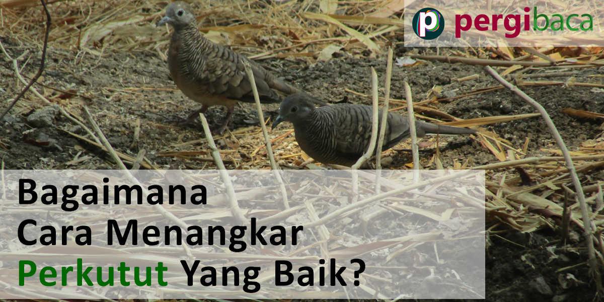 Panduan Cara Ternak Burung Perkutut Lokal Bagi Pemula. Yuk ...