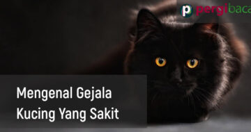 gejala ciri ciri kucing sakit